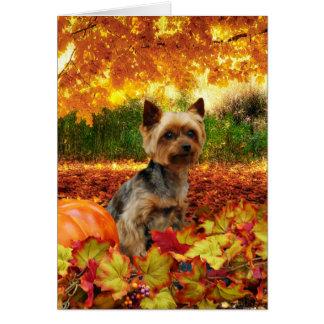 秋の感謝祭- Tucker -ヨークシャーテリア カード
