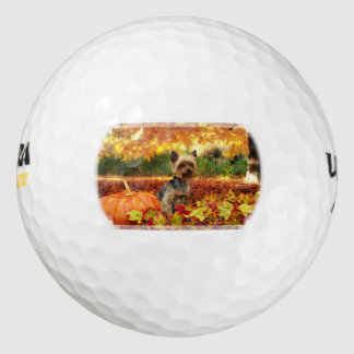 秋の感謝祭- Tucker -ヨークシャーテリア ゴルフボール