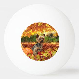 秋の感謝祭- Tucker -ヨークシャーテリア 卓球ボール