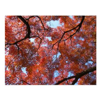 秋の日本のなかえでの葉 ポストカード