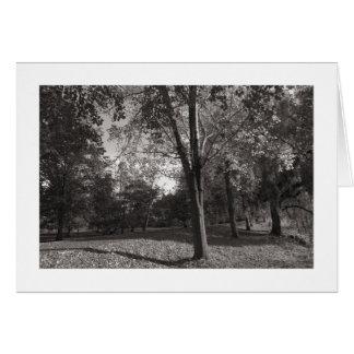 秋の景色、ビュート公園、カーディフ(縁どられる) カード