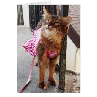 秋の服のかわいらしいソマリ族猫 カード