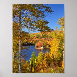 秋の木の景色、メイン ポスター