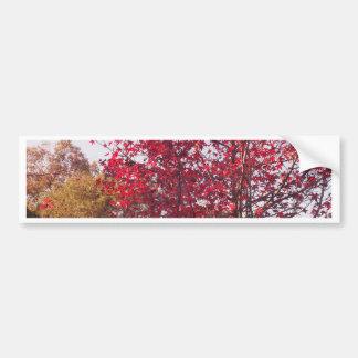 秋の木 バンパーステッカー