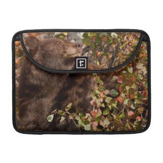 秋の果実を捜しているツキノワグマ MacBook PROスリーブ