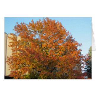 秋の栄光カード カード