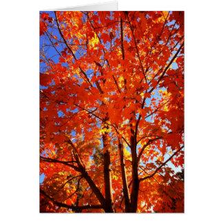 秋の栄光 グリーティングカード