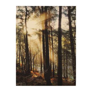 秋の森林日の出、景色 ウッドウォールアート