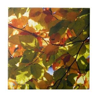 秋の森林8 タイル