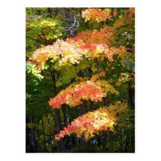 秋の素晴らしさ ポストカード