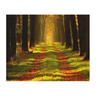 秋の美しい森林 ウッドウォールアート