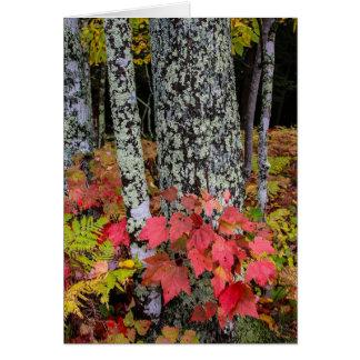 秋の群葉 カード