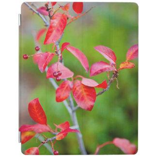 秋の西部のチョークのさくらんぼ(サクラ属Virginiana) iPadスマートカバー