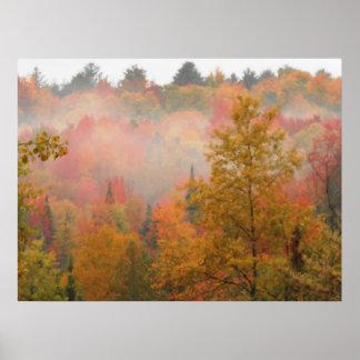 秋のAdirondacksの木場面景色 ポスター