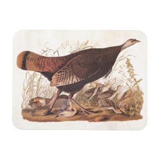 秋のAudubon野生のトルコの雌鶏そしてひよこ マグネット