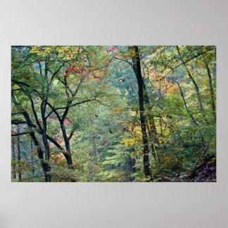 秋のtouchの夏の森林 ポスター