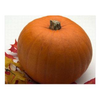 秋カボチャ ポストカード