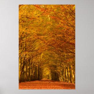 秋ポスターの森林を通した歩く道 ポスター
