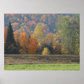 秋分野のAdirondacksの木場面景色 ポスター