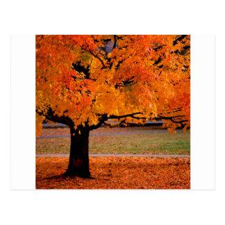 秋美しい ポストカード