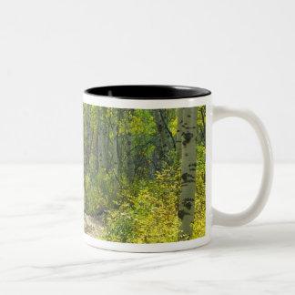 秋色の道およびKeblerの《植物》アスペン ツートーンマグカップ