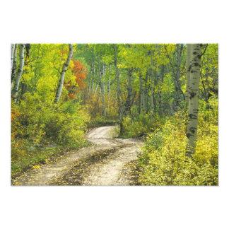 秋色の道およびKeblerの《植物》アスペン フォトプリント