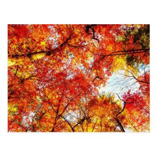 秋 ポストカード