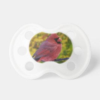 秋、Cardinalisのオスの北の(鳥)ショウジョウコウカンチョウ おしゃぶり