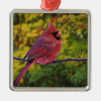 秋、Cardinalisのオスの北の(鳥)ショウジョウコウカンチョウ メタルオーナメント
