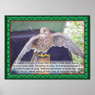 科学、動物、鳥、Kestrel ポスター