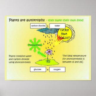科学、植物、サイン、食糧 ポスター