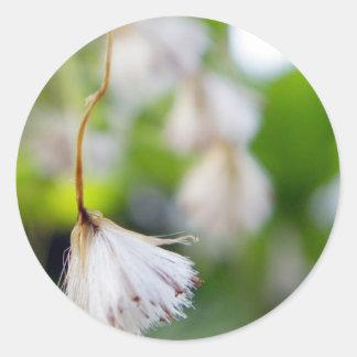 種の綿毛 ラウンドシール