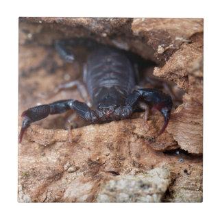 種のEuscorpiusのitalicusの蠍 タイル