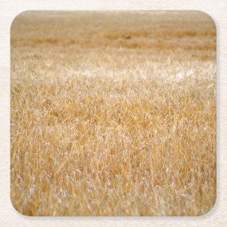穀物のこはく色の波 スクエアペーパーコースター