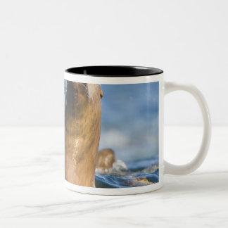 積極的な星のアシカのEumetopias ツートーンマグカップ