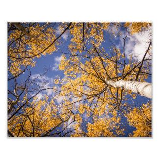 空および《植物》アスペン フォトプリント