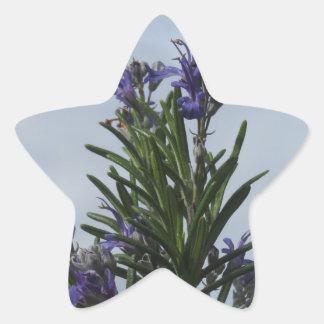 空に対する花が付いているローズマリーの植物 星シール