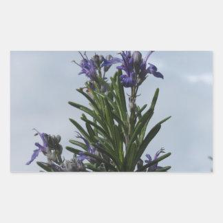 空に対する花が付いているローズマリーの植物 長方形シール