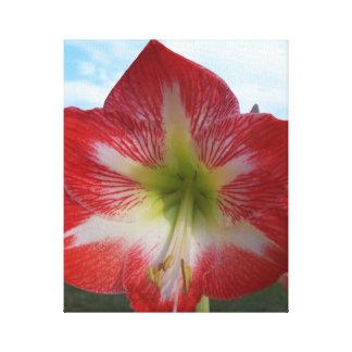 空に対する赤く及び白いアマリリスの花 キャンバスプリント