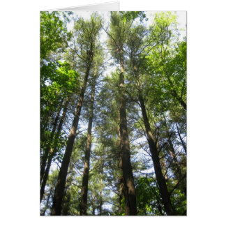 空のための木の範囲 カード