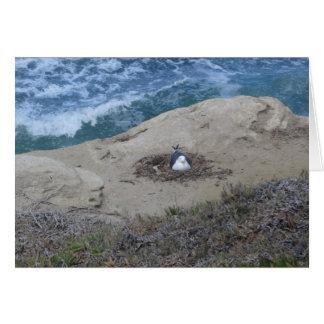 空白のなメッセージカード--カモメの巣 カード