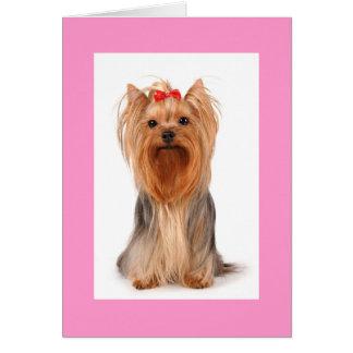空白のなヨークシャテリアの小犬Notecard カード
