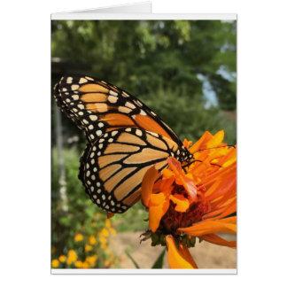 空白のな(昆虫)オオカバマダラ、モナークカード カード