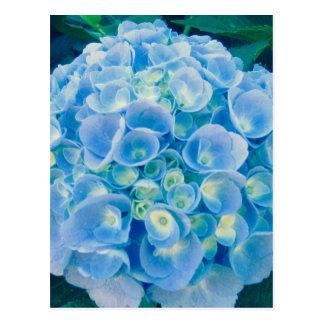 空色のアジサイの開花 ポストカード