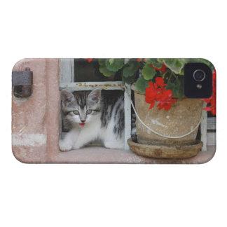 窓を見ている子ネコ Case-Mate iPhone 4 ケース