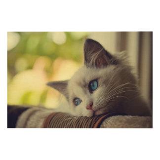 窓を見ているRagdollの子ネコ ウッドウォールアート