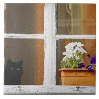 窓、Sighisoara、ルーマニアによって開花して下さい タイル