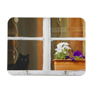 窓、Sighisoara、ルーマニアによって開花して下さい マグネット