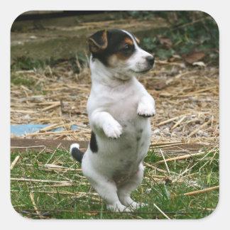 立つジャックラッセルテリアの子犬のステッカーシート スクエアシール
