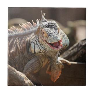 笑うイグアナの写真撮影 タイル
